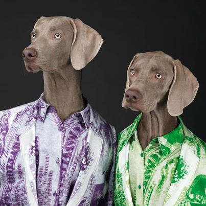 William_Wegman_Acne_Weinamarer_Dogs.1jpg